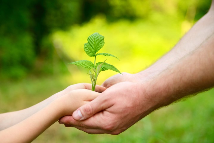 Father's and son's hands holding green growing plant over nature